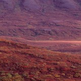 Autumn colours across the tundra. Denali National Park.