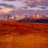 Autumn colours in evening light. Denali National Park.