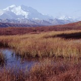 Mt McKinley, as with other dominant peaks of the Alaska Range such as Mt Foraker and Mt Hunter are composed of resistant granites. These rocks are not easily worn away by erosion and weathering allowing elevations to remain relatively high compared with other mountains of similar ages. Denali National Park.